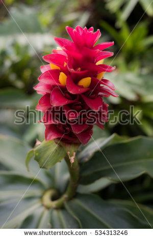 Flower Bud Stock Photos, Royalty.