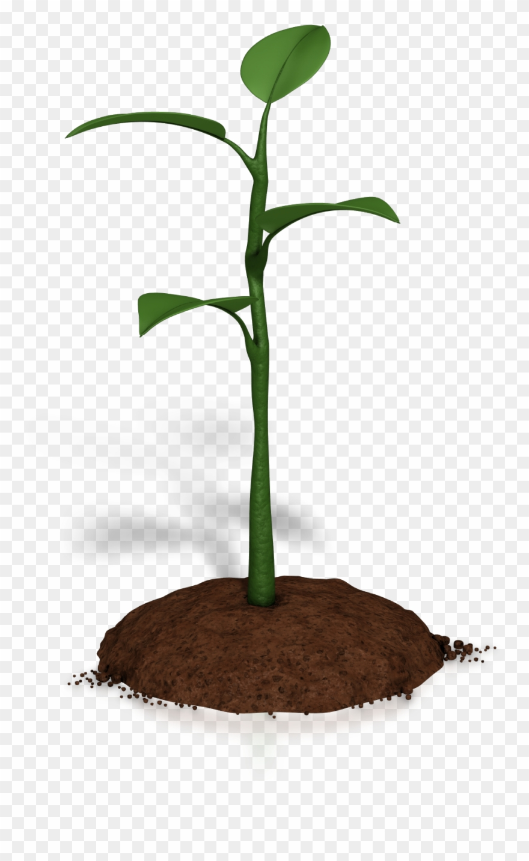 Soil Clipart Plant Growth.