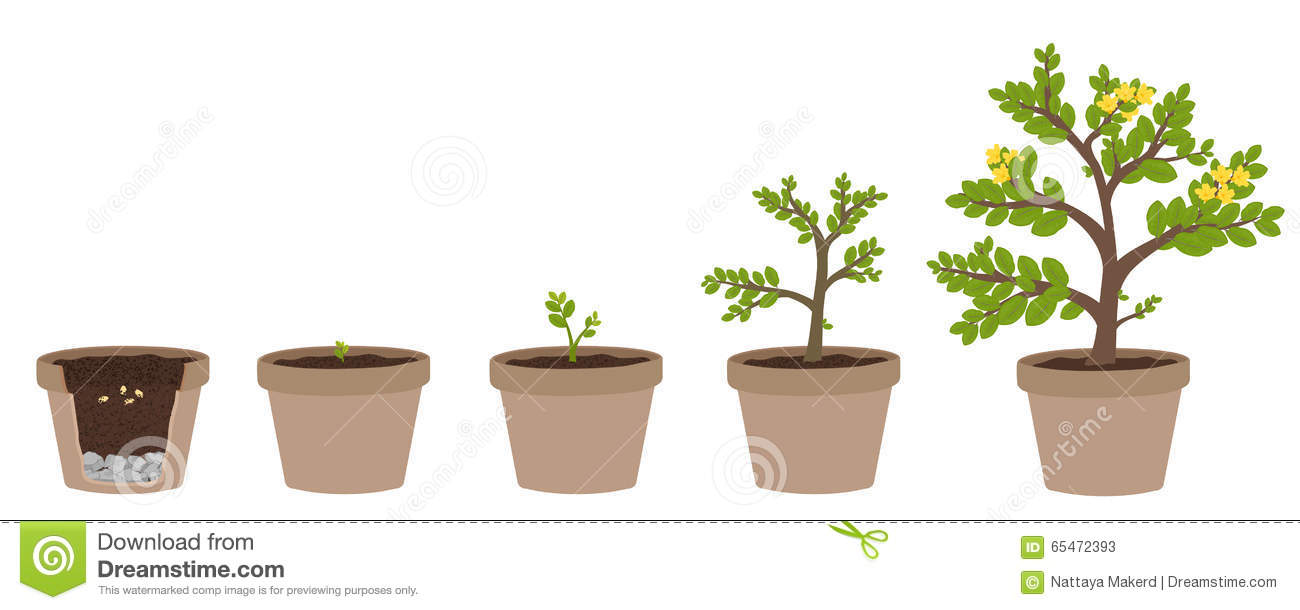 How Do Plants Grow Clipart.