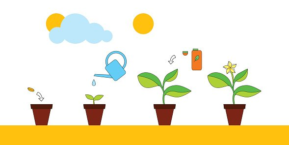 House plant growth and care advice infographics, vector.