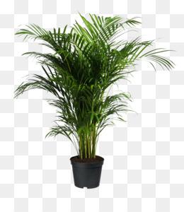 Plants Png Pictures & Free Plants Pictur #373192.