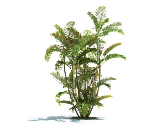 plant images free download 20 free Cliparts | Download