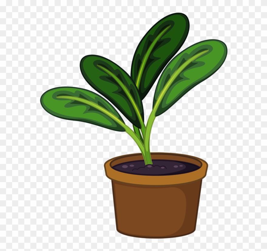 Pot Plant Clipart Transparent.
