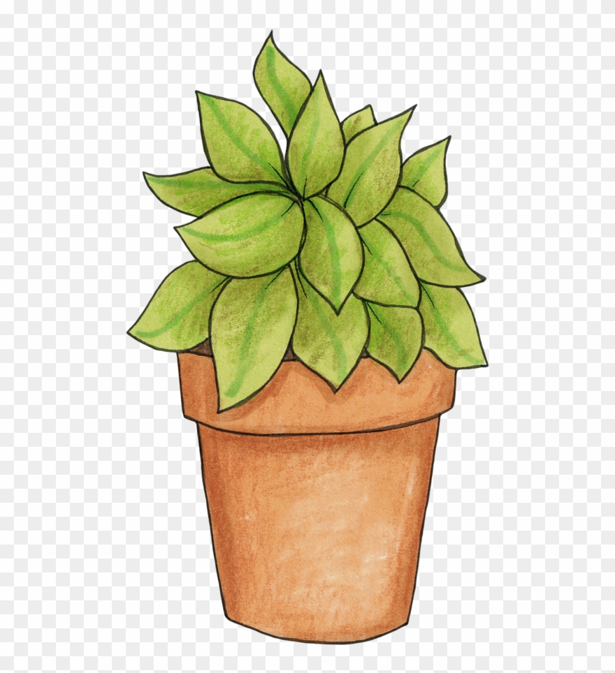 Potted Plant.