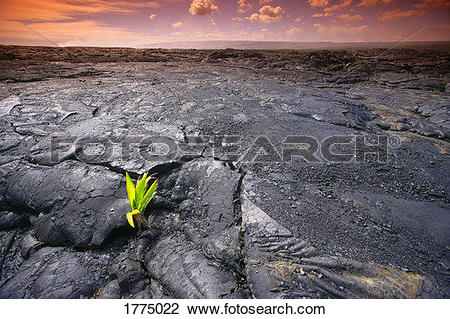 Stock Photo of Lava rock with plant 1775022.