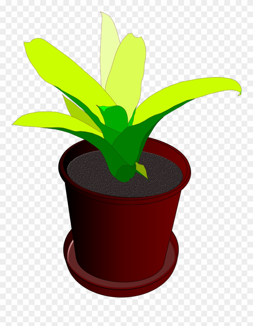 Plant,pot,flower Pot,plant Pot,green,free Vector Graphics.
