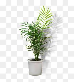 Flower Pot PNG Transparent Flower Pot.PNG Images..