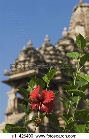 Stock Photography of Flowering plant with temple in the background.