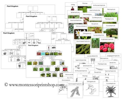 1000+ images about Plant Kingdom on Pinterest.