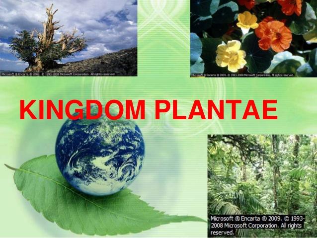 Kingdom plantae.