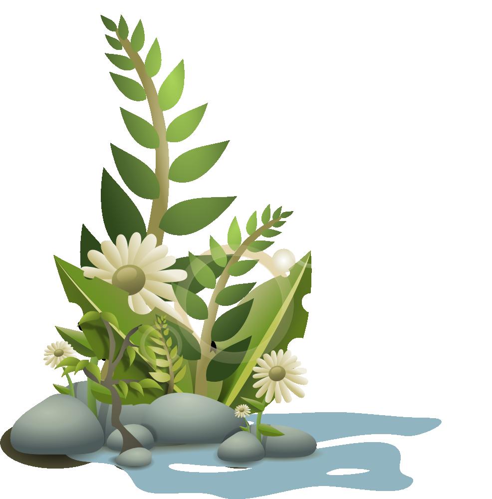 Plant kingdom clipart - Clipground