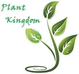 Plant Kingdom.