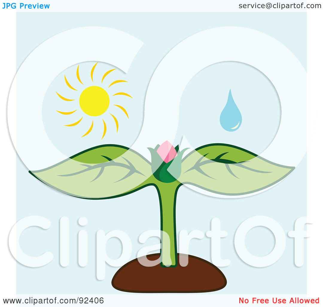 Free Plant Water Clipart.