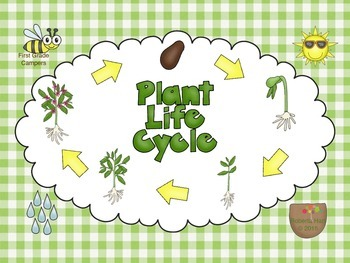 Plant life cycle clipart 2 » Clipart Station.