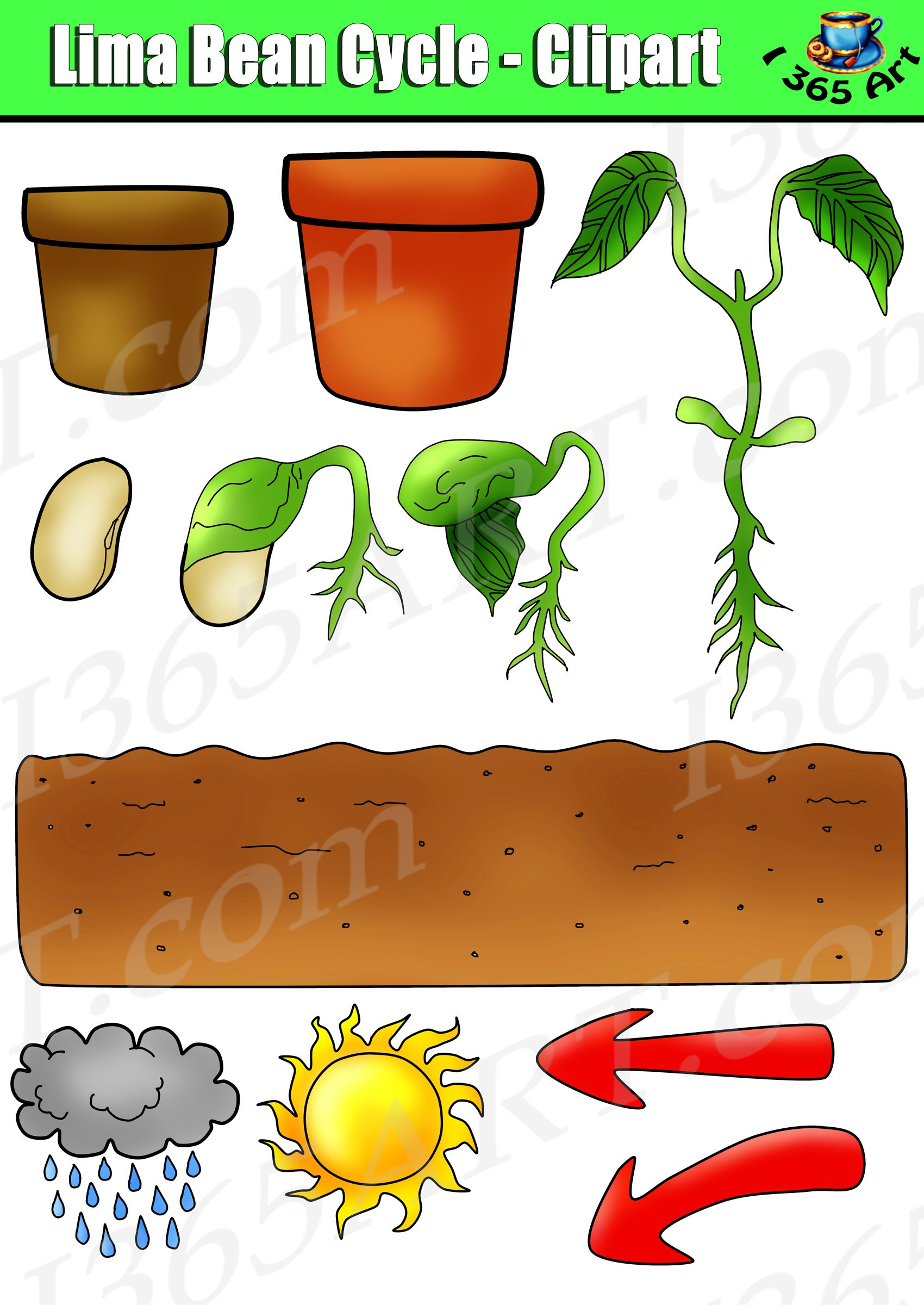 plant life clipart #7