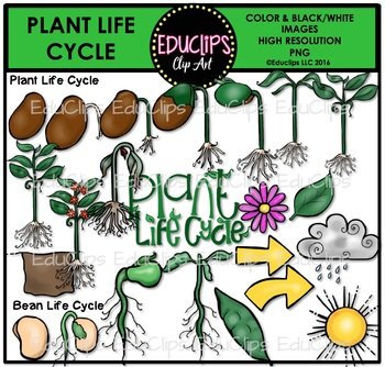 Plant Life Cycle Clip Art Set {Educlips Clipart}.