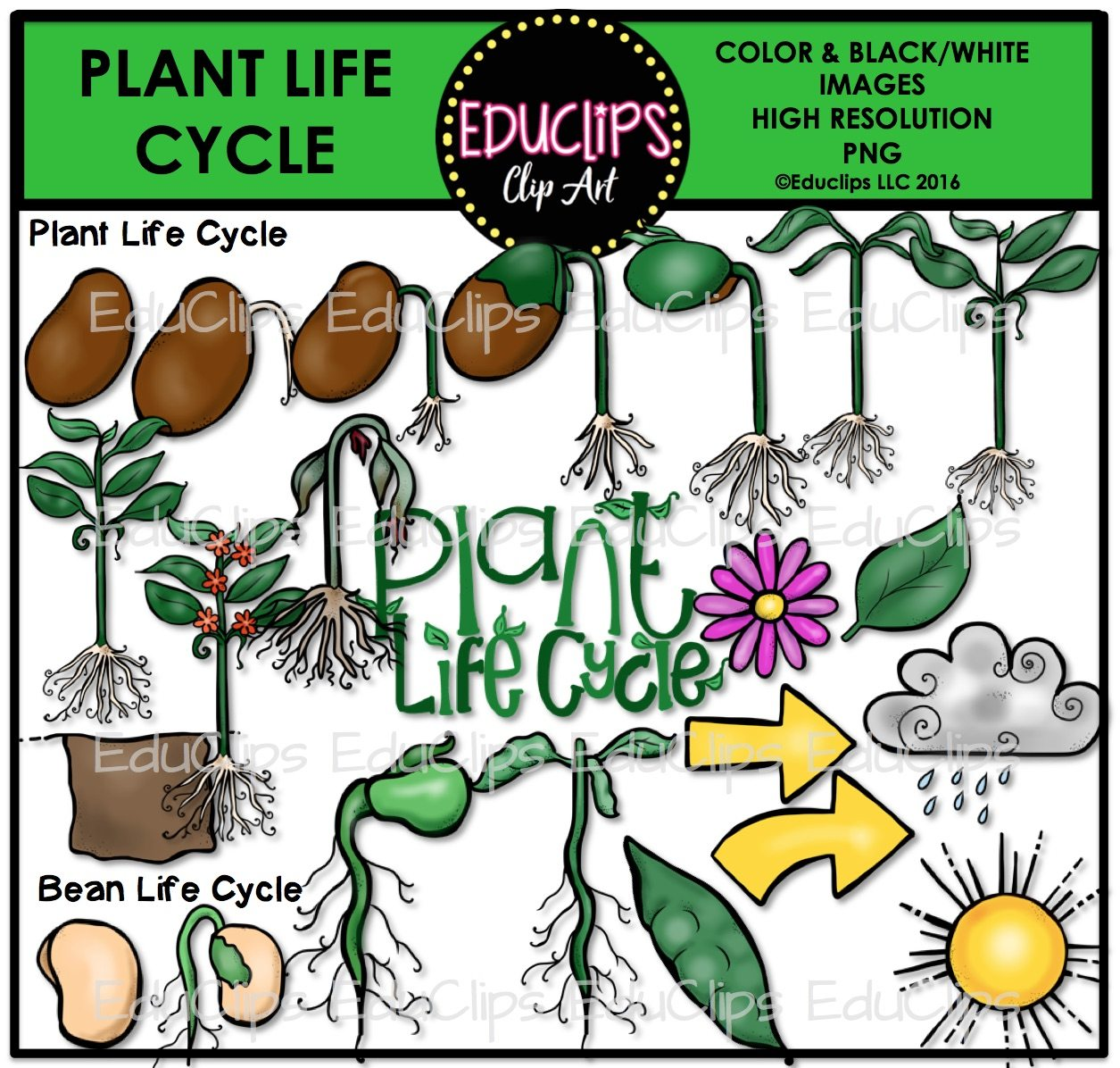 Plant life cycle clipart 8 » Clipart Station.