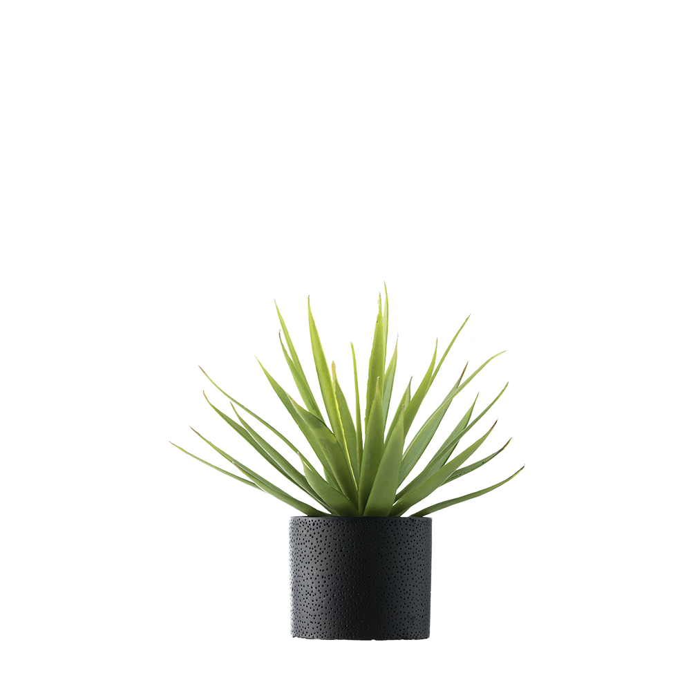 Plant Free PNG Images, Potted Plant, Cartoon Plant Images.