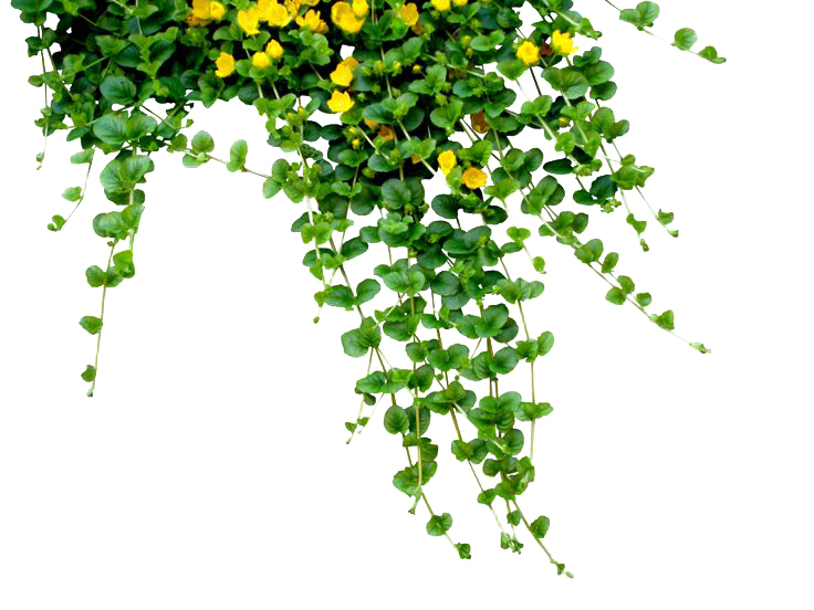 Download Plants PNG Free Download.
