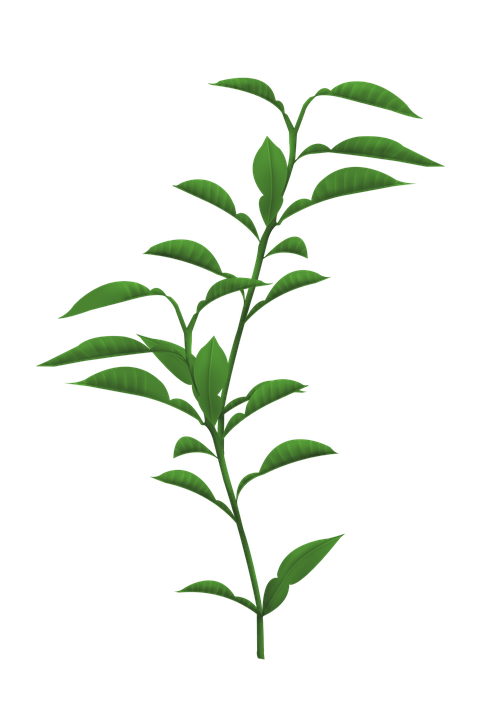 Stem Of A Plant PNG Transparent Stem Of A Plant.PNG Images.