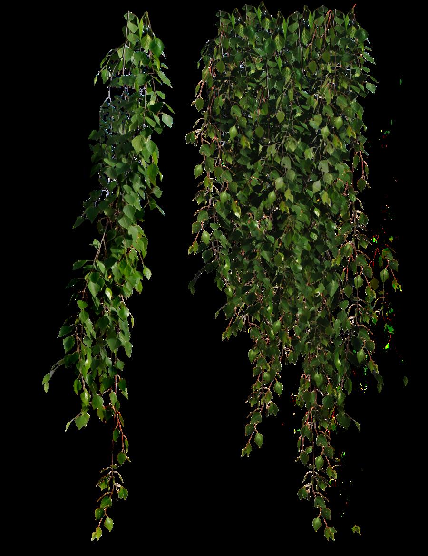 Plants PNG Transparent Plants.PNG Images..