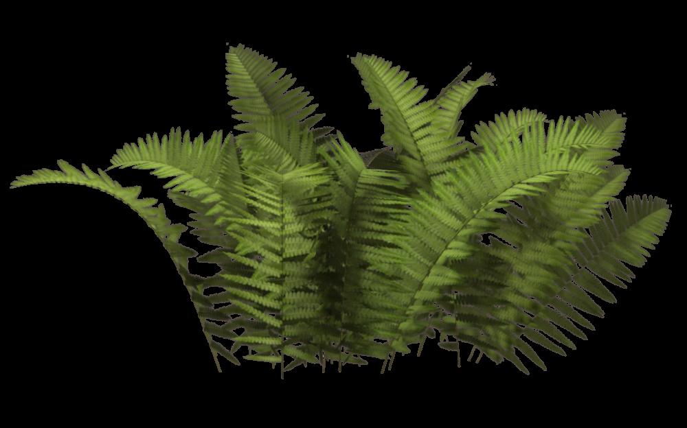 Download Plants PNG HD 379.