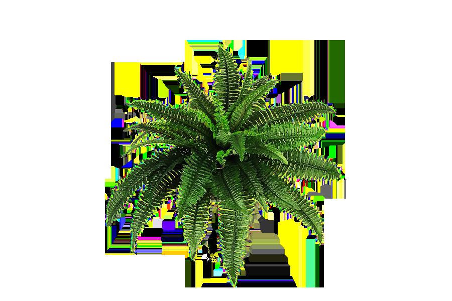 Plant PNG HD Transparent Plant HD.PNG Images..