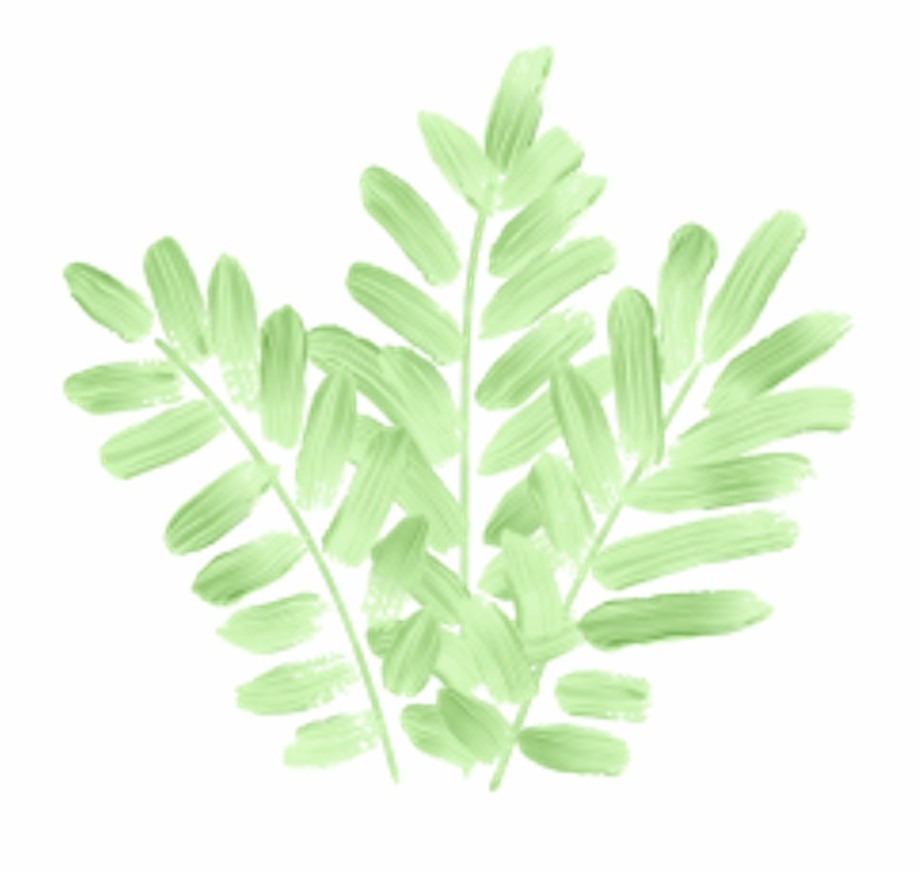 tumblr #leaves #green #nature #plant #hojas #verde.