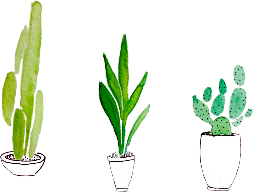 sticker plant plants cactus green tumblr png aesthetic.
