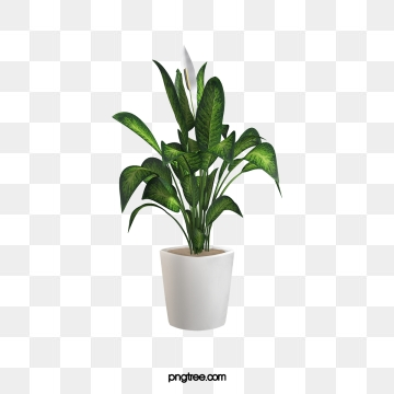 Potted Plant PNG Images.