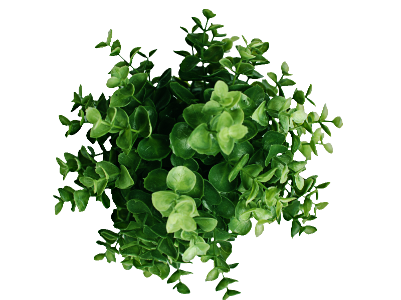 Plant Top View PNG Image (Nature.