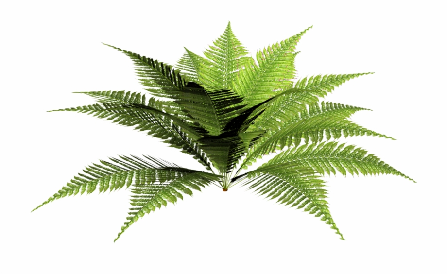 Tropical Plant Png.