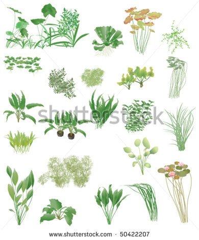 Aquatic Plant Clip Art.