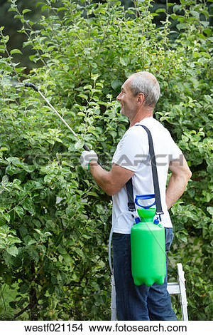 Stock Photo of Man spraying plant protection products in the.