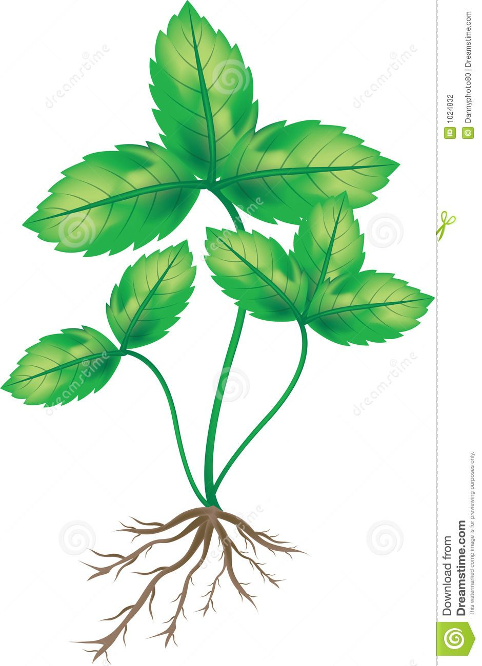 Plant With Roots Clip Art Plant with roo.