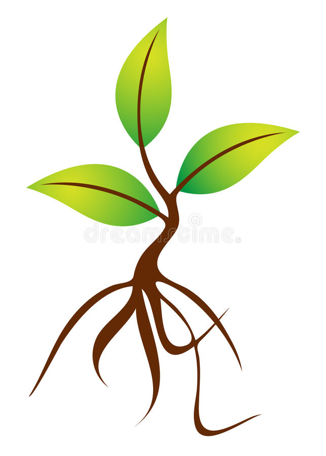 Roots Of A Plant Clipart.
