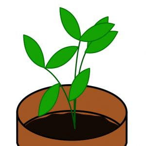 Free Plant Sale Cliparts, Download Free Clip Art, Free Clip.