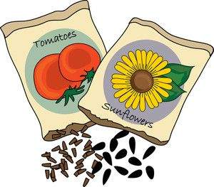 Seed plant clipart #14.