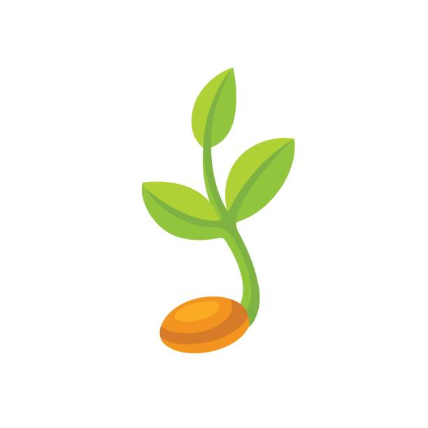 Sprout clipart free download on scubasanmateo.