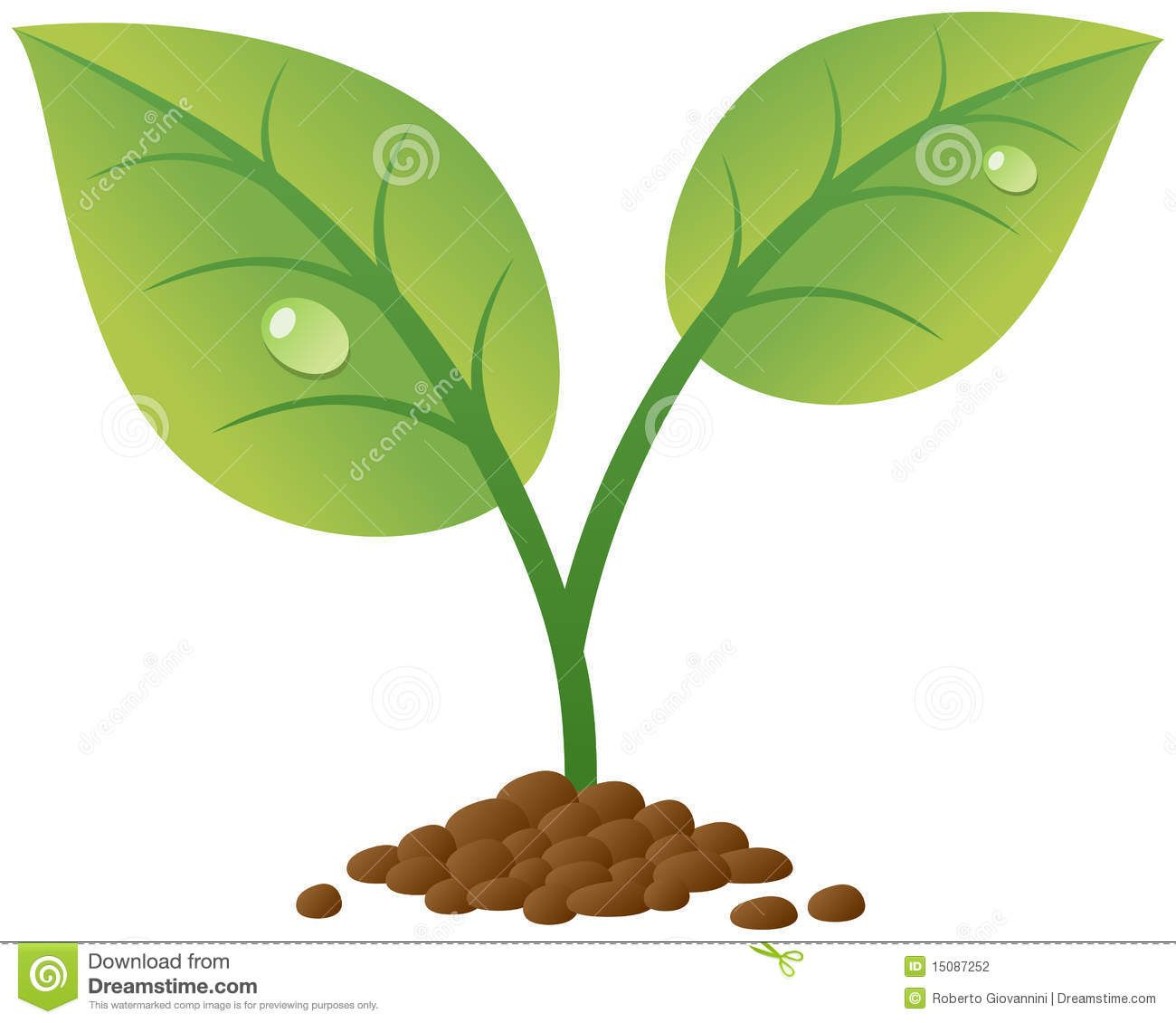 Plant Sprout Clipart.