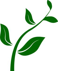 plant stem.