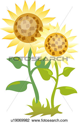 Clipart of flowers, sunflower, flower, plants, plant, bloom.