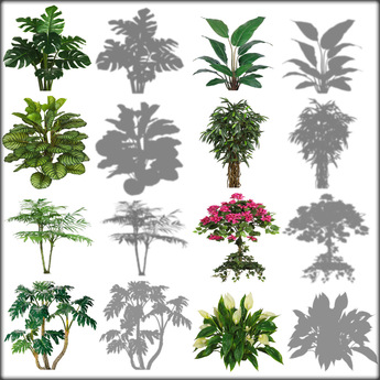 Plant texture clipart #9