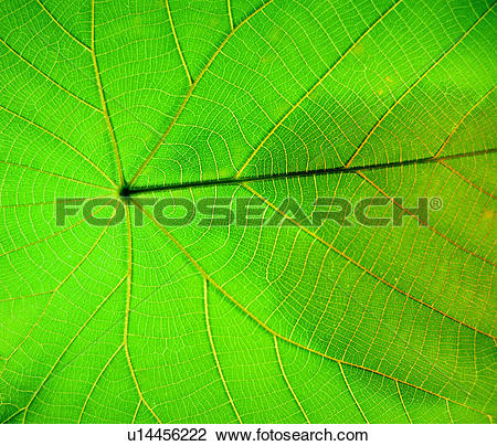 Stock Photo of decorative design, plant, texture, leaf, grain.
