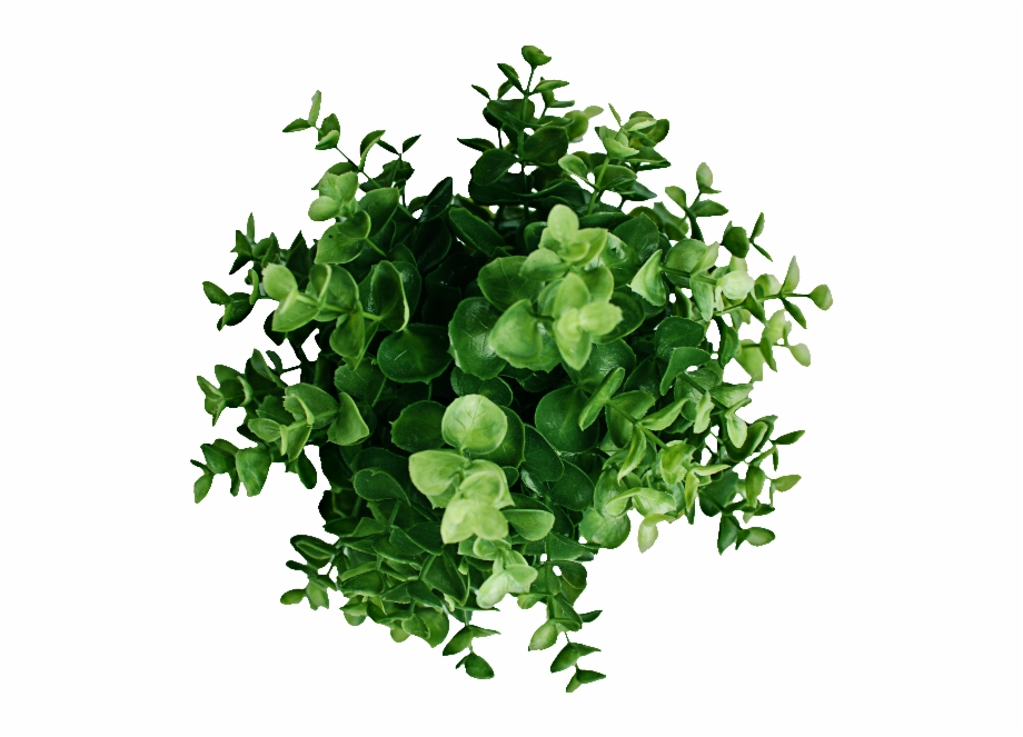 Plant Top View Png Free Download.