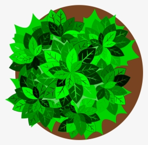 Plant Top View Png PNG Images.