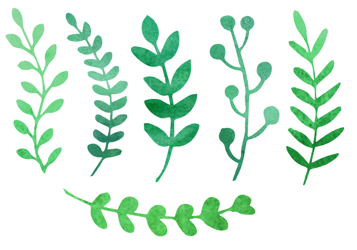 Plant Free Vector Art.