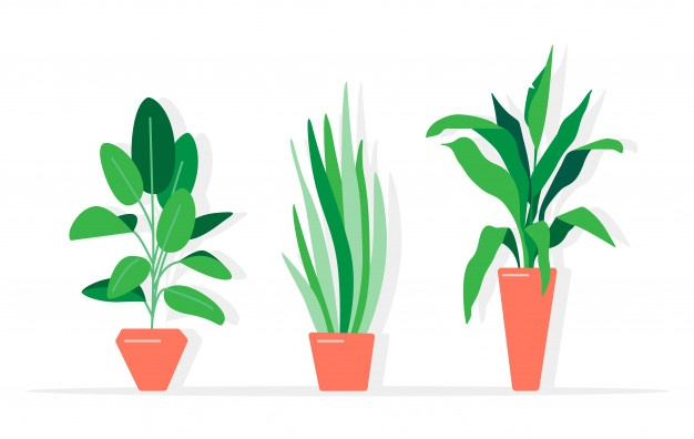Growing Plant Vectors, Photos and PSD files.