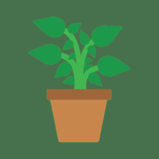 Flat flower plant tub.
