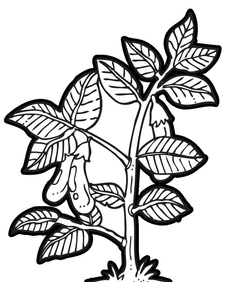 Plant white clipart - Clipground